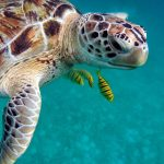 The 12 Coolest Pet Turtle Habitats (with Pictures )